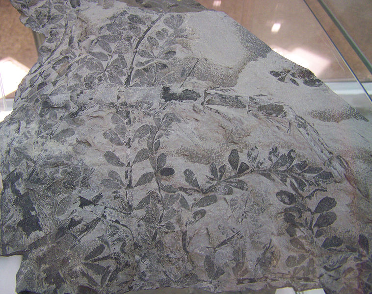 Fossilized Leaf Imprints Nevada