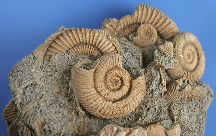 Fossil Collecting in Nevada