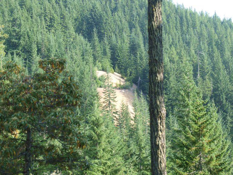 Bohemia Oregon