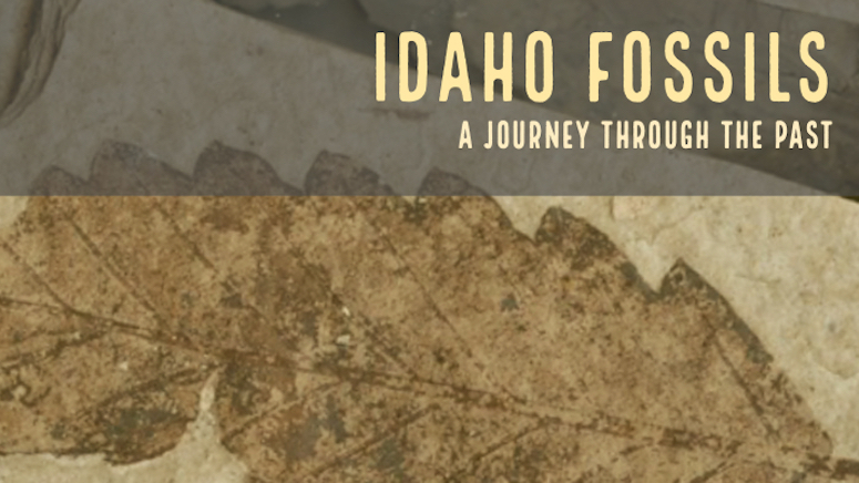 Fossil Collecting Idaho