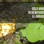 gold mining canada