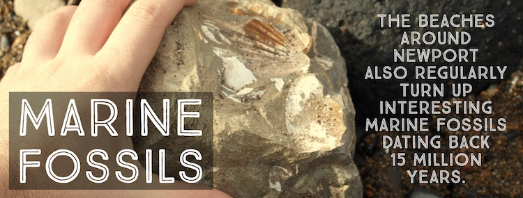Oregon Coast Fossils