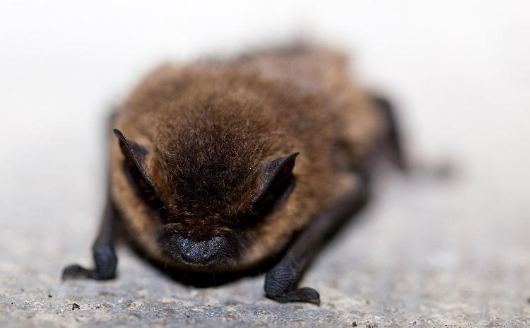 Old Mine Bats