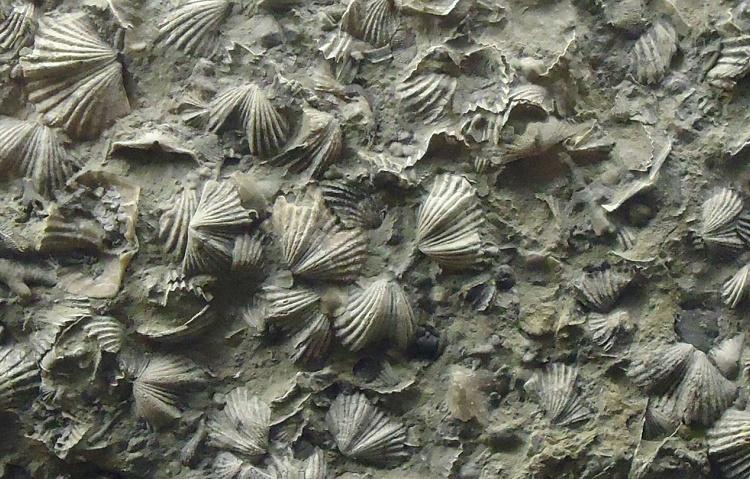 Invertabrate Fossils Oregon