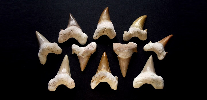 Georgia Fossils Hunting