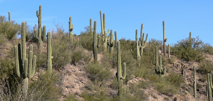 Wickenburg is located in the Sonoran Desert north of Phoenix.